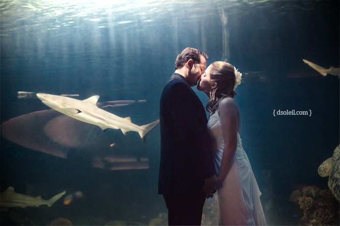Vancouver Aquarium wedding in Stanley Park