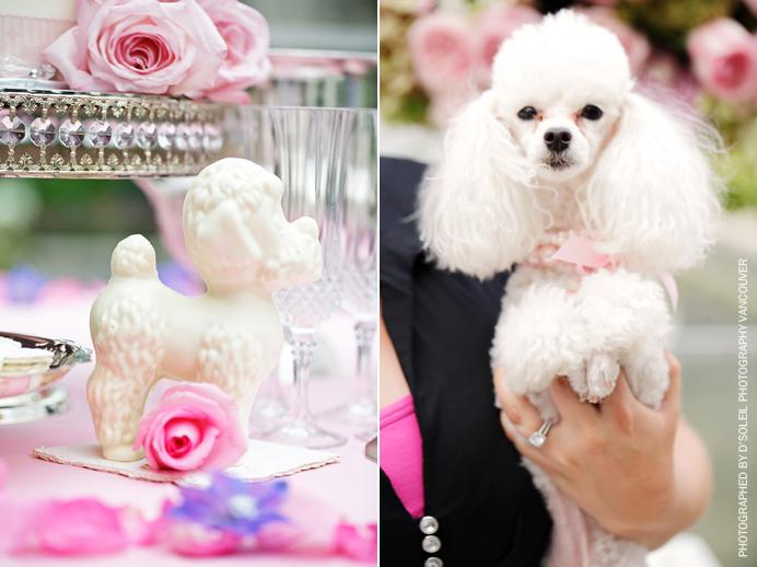 Pink poodle at wedding