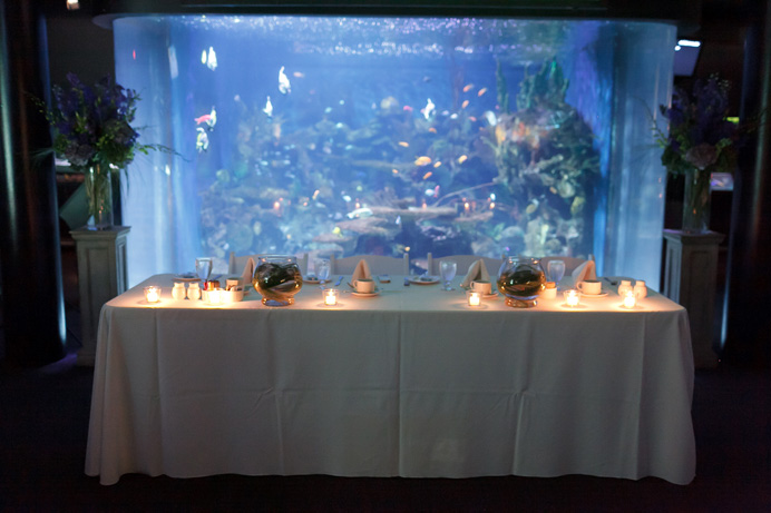 Vancouver aquarium wedding photos (12)