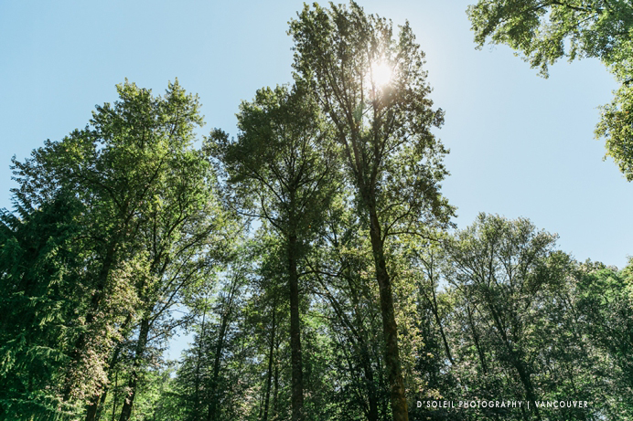 The trees above Nicole and Tyler's Burnaby Mountain wedding