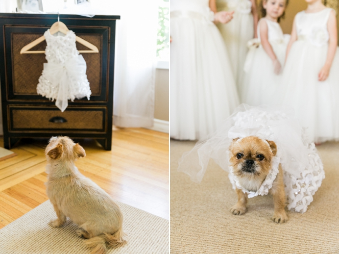 dog's wedding dress